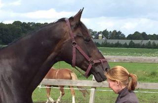 kennismaking paardencoaching