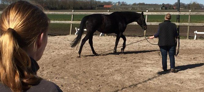 longeren met ervaren paard