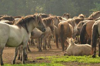 leren van paarden
