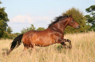 het paard zoekt mij