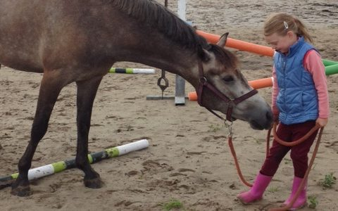 kind& pony