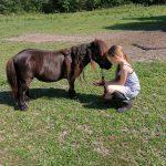 Pony Power voor Kids start 17 september